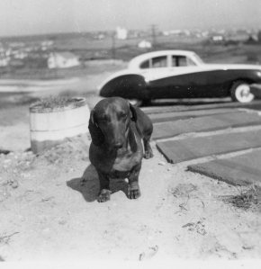 Our eccentric Daschound Ronzoni outside our house in Montauk. Uncle Tommy's Jaguar Mark IX in background.